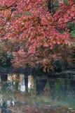 在池塘的秋天颜色 免版税图库摄影