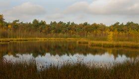 在池塘的秋天颜色 免版税库存照片