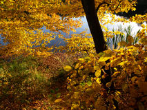 在池塘的秋天 库存图片