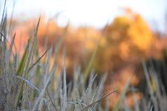 在池塘的秋天 免版税库存照片