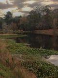 在池塘的秋天 免版税库存图片