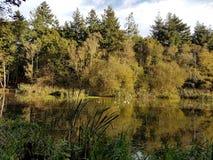 在池塘的阳光有鸭子的 免版税库存照片