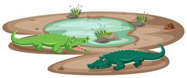 在池塘的鳄鱼 库存例证