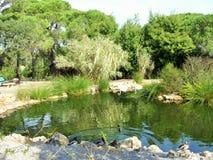 在池塘的鸭子 图库摄影