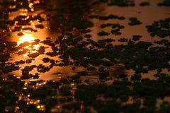 在池塘空头发行股票照片的独特的日落反射 免版税库存图片