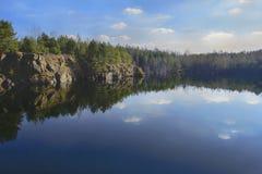 在池塘银行的杉木  库存图片