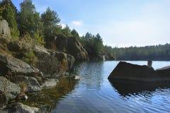 在池塘银行的杉木  图库摄影