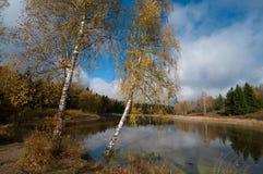 在池塘附近的两桦树 库存照片