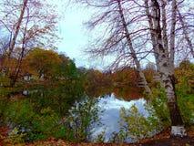 在池塘附近的五颜六色的树 免版税库存照片