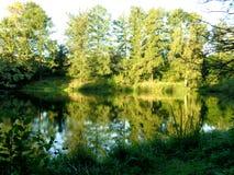 在池塘附近的树丛林和灌木在一个晴朗的夏日 免版税库存图片