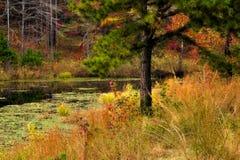 在池塘附近的树在秋天 库存照片