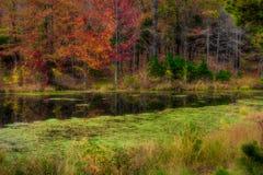 在池塘附近的树在秋天 库存图片