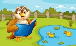 在池塘附近的猫头鹰读书 免版税图库摄影