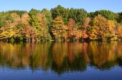 在池塘附近的秋天树有野鸭的低头,在水反射的加拿大鹅 免版税库存图片