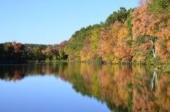 在池塘附近的秋天树有野鸭的低头,在水反射的加拿大鹅 免版税图库摄影