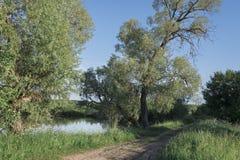 在池塘附近的高绿色树,高明亮的水多的绿草和路沿池塘 免版税库存图片