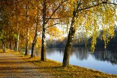 在池塘附近的黄色树在秋天 图库摄影
