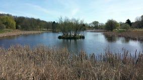 在池塘附近 免版税库存图片