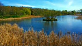 在池塘附近 库存照片