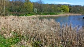 在池塘附近 图库摄影