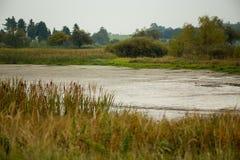 在池塘,秋天场面的芦苇 免版税库存照片