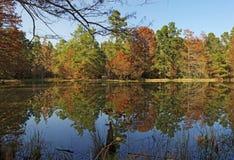 在池塘W G琼斯状态森林的反射 免版税库存照片