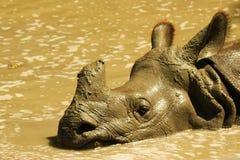在池水的犀牛 图库摄影