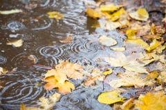 在池水的反射与叶子和雨下落的 免版税库存照片