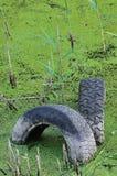在污染的池塘水坑,水污染的被放弃的老轮胎 库存照片