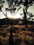 在汤斯维尔昆士兰附近的去的灌木 免版税库存照片
