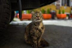 在汽车下的一只街道猫在伊斯坦布尔,土耳其 图库摄影