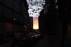 在汽车之间的日落 图库摄影
