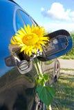 在汽车坦克的黄色向日葵  库存图片