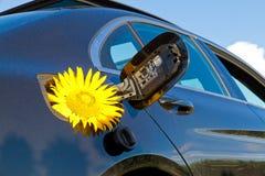 在汽车坦克的黄色向日葵  免版税库存照片