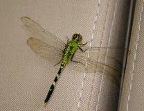 在汽车座位的绿色蜻蜓 图库摄影