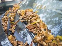 在汽车挡风玻璃的秋叶 库存图片