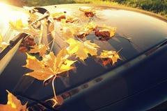 在汽车的下落的秋叶 免版税库存照片