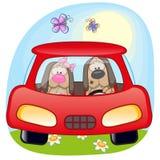在汽车的两条狗 免版税库存图片