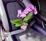 在汽车的兰花 库存图片