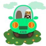 在汽车的动画片绵羊 免版税库存图片