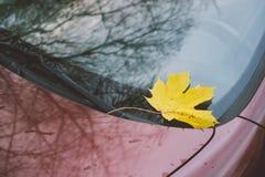 在汽车的挡风玻璃的下落的黄色枫叶 图库摄影