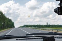 在汽车的挡风玻璃的死亡昆虫 玻璃的表面上的被铺平的甲虫 免版税库存图片