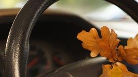 在汽车的橡木叶子 免版税库存图片