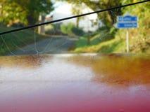 在汽车的蜘蛛网 图库摄影
