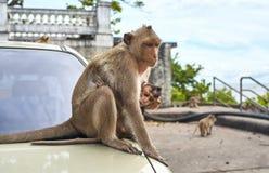 在汽车的猴子,泰国 库存照片