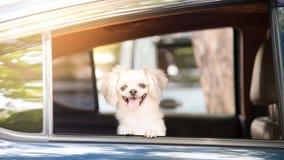 在汽车里面的狗那么逗人喜爱的开会等待旅行 库存图片