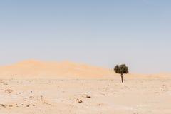 在沙丘中的树在磨擦AlKhali沙漠(阿曼) 图库摄影