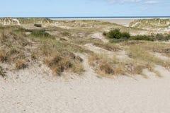 在沙丘和北海海岛borkum的植被的更加接近的看法在德国 库存图片