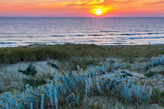 在沙丘的日落 免版税库存图片