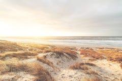 在沙丘的明亮的日落在丹麦 免版税库存照片